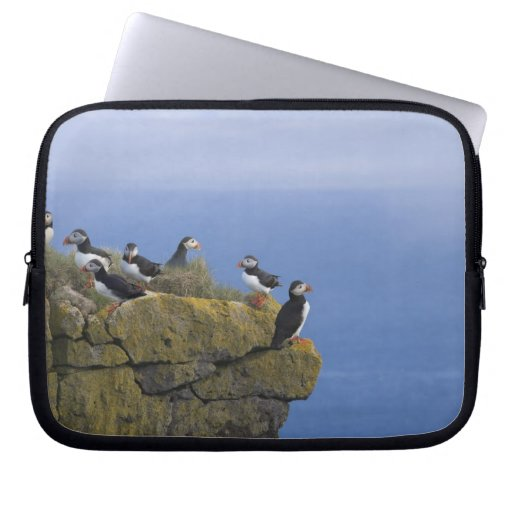 Atlantic Puffins (Fratercula arctica) on cliff Computer Sleeves
