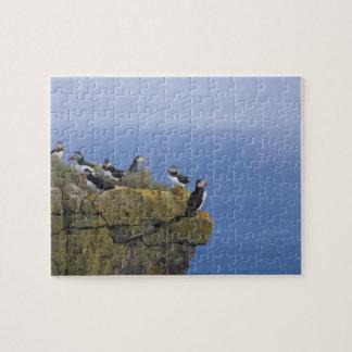 Atlantic Puffins (Fratercula arctica) on cliff Puzzle