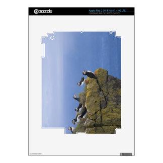 Atlantic Puffins (Fratercula arctica) on cliff Decals For iPad 3