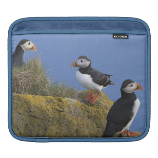 Atlantic Puffins (Fratercula arctica) on cliff Sleeve For iPads