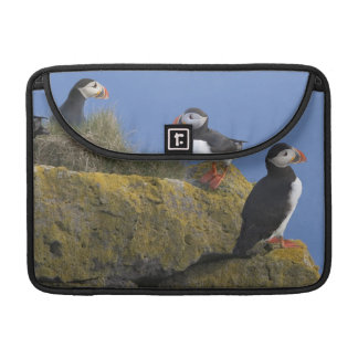 Atlantic Puffins (Fratercula arctica) on cliff Sleeve For MacBook Pro