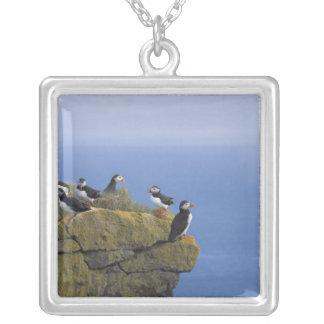 Atlantic Puffins (Fratercula arctica) on cliff Square Pendant Necklace