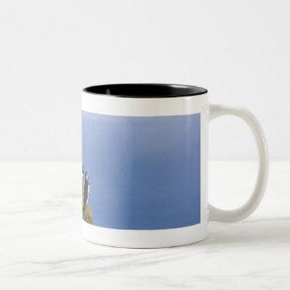 Atlantic Puffins (Fratercula arctica) on cliff Two-Tone Coffee Mug