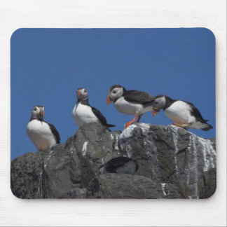 Atlantic Puffins Mouse Pads