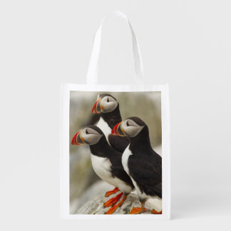 Atlantic Puffins on Machias Seal Island off the Grocery Bag