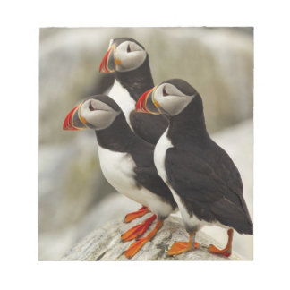 Atlantic Puffins on Machias Seal Island off the Notepads