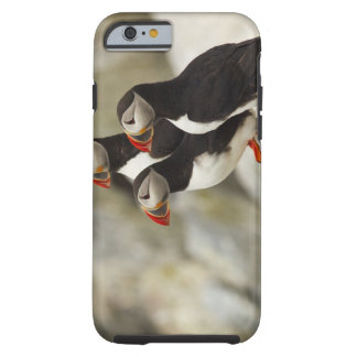 Atlantic Puffins on Machias Seal Island off the Tough iPhone 6 Case