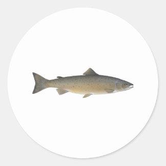 Atlantic Salmon Classic Round Sticker