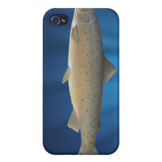 Atlantic Salmon Covers For iPhone 4