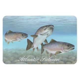 Atlantic Salmon Painting Magnet