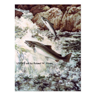 Atlantic Salmon Postcard
