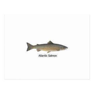 Atlantic Salmon (titled) Post Cards