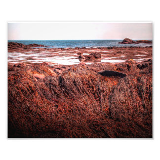Atlantic Seaweed Photo Print