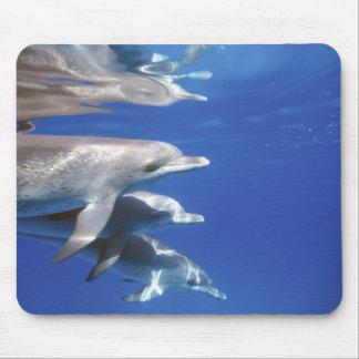 Atlantic spotted dolphins. Bimini, Bahamas. 10 Mouse Pad