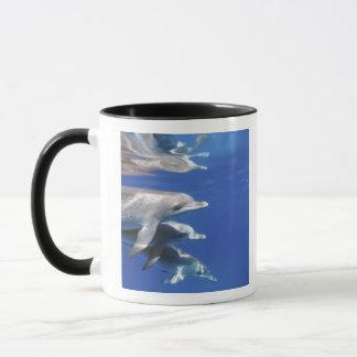 Atlantic spotted dolphins. Bimini, Bahamas. 10 Mug