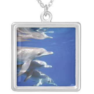 Atlantic spotted dolphins. Bimini, Bahamas. 10 Silver Plated Necklace