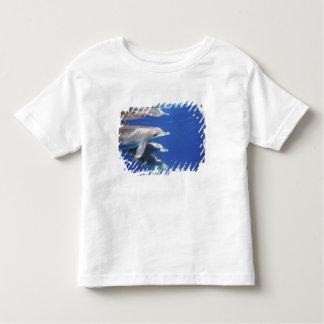 Atlantic spotted dolphins. Bimini, Bahamas. 10 Toddler T-shirt