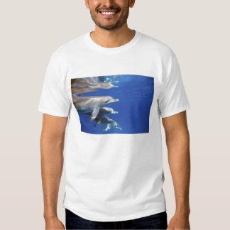 Atlantic spotted dolphins. Bimini, Bahamas. 10 Tshirt