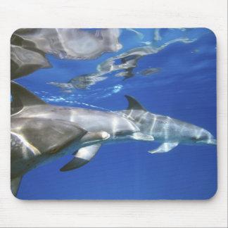 Atlantic spotted dolphins. Bimini, Bahamas. 11 Mouse Pad
