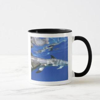 Atlantic spotted dolphins. Bimini, Bahamas. 11 Mug