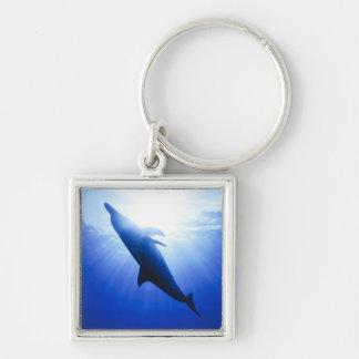 Atlantic spotted dolphins. Bimini, Bahamas. 2 Keychain