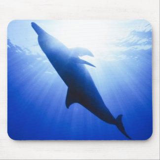 Atlantic spotted dolphins. Bimini, Bahamas. 2 Mouse Pad