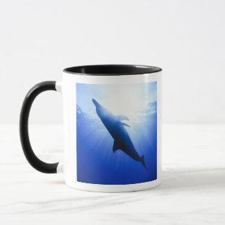 Atlantic spotted dolphins. Bimini, Bahamas. 2 Mug