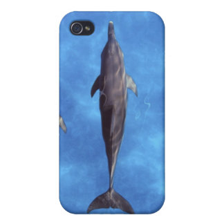 Atlantic spotted dolphins. Bimini, Bahamas. 3 iPhone 4 Cover
