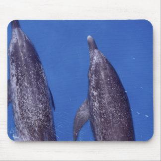 Atlantic spotted dolphins. Bimini, Bahamas. 4 Mouse Pad