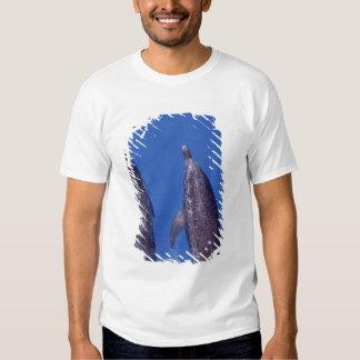 Atlantic spotted dolphins. Bimini, Bahamas. 4 T-shirts