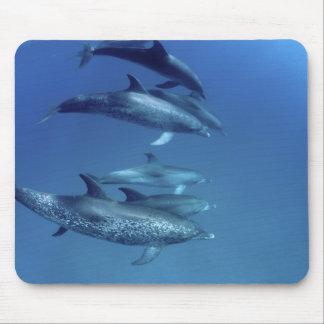 Atlantic spotted dolphins. Bimini, Bahamas. 5 Mouse Pad