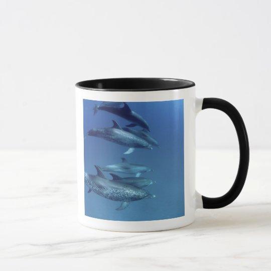 Atlantic spotted dolphins. Bimini, Bahamas. 5 Mug
