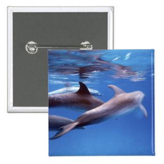 Atlantic spotted dolphins Bimini Bahamas 6 Buttons