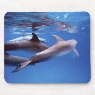 Atlantic spotted dolphins. Bimini, Bahamas. 6 Mouse Pad