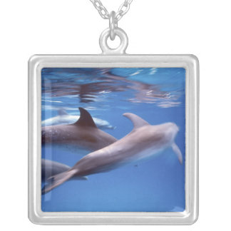 Atlantic spotted dolphins. Bimini, Bahamas. 6 Silver Plated Necklace