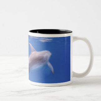 Atlantic spotted dolphins. Bimini, Bahamas. 6 Two-Tone Coffee Mug