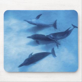 Atlantic spotted dolphins. Bimini, Bahamas. 7 Mouse Pad