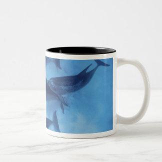 Atlantic spotted dolphins. Bimini, Bahamas. 7 Two-Tone Coffee Mug