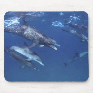 Atlantic spotted dolphins. Bimini, Bahamas. 8 Mouse Pad
