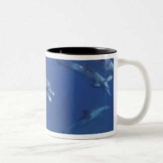 Atlantic spotted dolphins. Bimini, Bahamas. 8 Two-Tone Coffee Mug