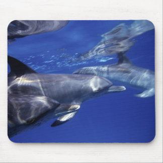Atlantic spotted dolphins. Bimini, Bahamas. 9 Mouse Pad
