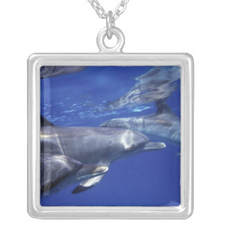 Atlantic spotted dolphins. Bimini, Bahamas. 9 Silver Plated Necklace