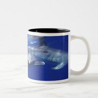 Atlantic spotted dolphins. Bimini, Bahamas. 9 Two-Tone Coffee Mug
