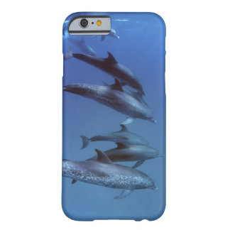 Atlantic spotted dolphins. Bimini, Bahamas. Barely There iPhone 6 Case