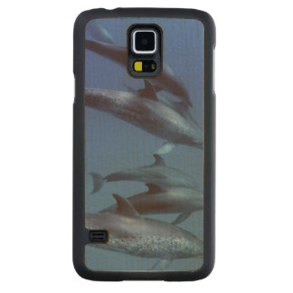 Atlantic spotted dolphins. Bimini, Bahamas. Carved Maple Galaxy S5 Slim Case