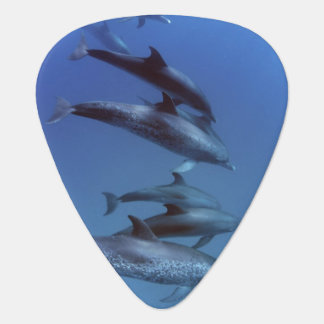 Atlantic spotted dolphins. Bimini, Bahamas. Guitar Pick