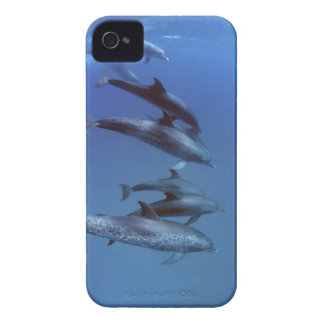 Atlantic spotted dolphins. Bimini, Bahamas. iPhone 4 Case-Mate Case