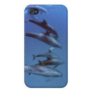 Atlantic spotted dolphins. Bimini, Bahamas. iPhone 4 Cover