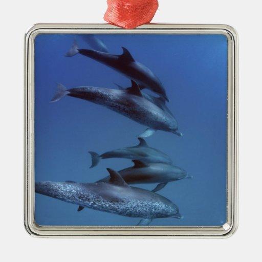 Atlantic spotted dolphins. Bimini, Bahamas. Metal Ornament