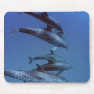 Atlantic spotted dolphins. Bimini, Bahamas. Mouse Pad